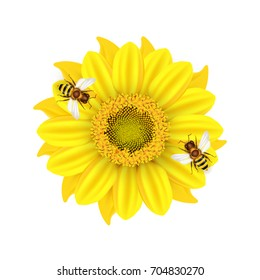 Vector illustration with a yellow sunflowers and bees on a white background. Ready objects, elements for your flyer, banner, infographics, poster, advertisement, greeting and wedding card.