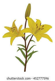 Vector illustration of yellow tiger lily.