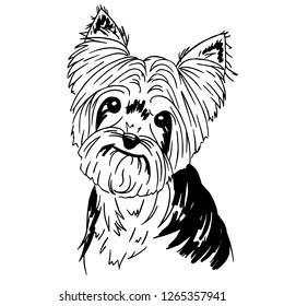 Vector illustration of yorkshire terrier on white background. Black and white simple art of cute dog.