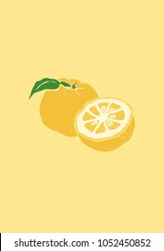 Vector Illustration. Yuja (Korean citron) illustration with color.