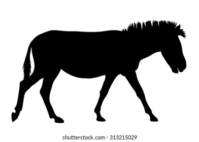 Vector illustration of zebra silhouette