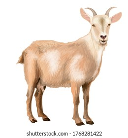 Vector illustration.Goat from the farm. goat from the ranch. Meat for restaurant. milk. domestic.