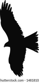 Vector illustration:raptor bird in action.