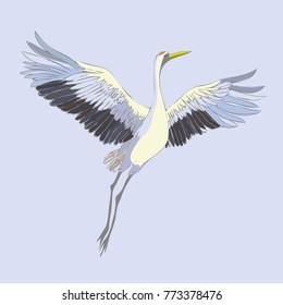 Vector of illustrations bird crane. White stork . isolated object