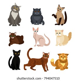 Vector illustrations of cat different breeds set, cute pet animals, lovely kitten on white background in flat style design.