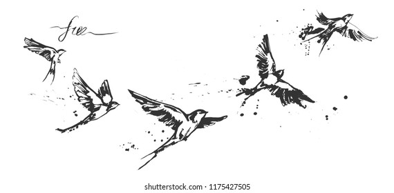 Vector illustrations of a dynamic flying swallow birds set. Modern splashing ink sketchy painting artwork. Monochrome black and white drawing. Perfect tattoo or t-shirt print.