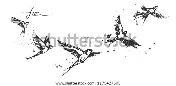 vlaštovka stříkat