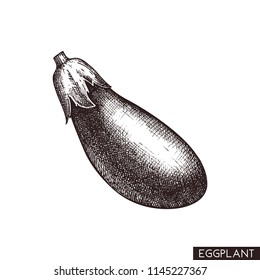 Vector illustrations of eggplant.  Hand drawn vegetable in engraved style. Healthy food drawing. Fresh and organic farm product for menu design.