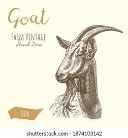 Vector illustrations of Goat. Vintage gravure style