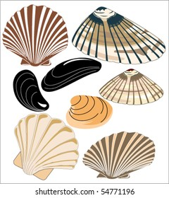 vector illustrations of mussels and clams