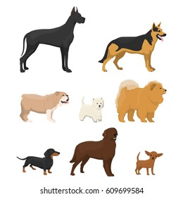 Vector illustrations set of different kinds of dog on white background.