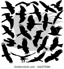 Vector illustrations set of the high in detail silhouettes of the Birds Of Prey (raptors). Eagles, Sea Eagles, Hawks, Kites, Harriers, Buzzards, Falcons, Accipiters, Ospreys, Buteos.