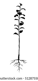 Vector illustrations of silhouette annual seedling apple trees with roots