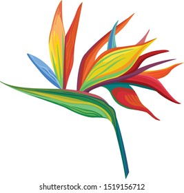 Vector illustrations Strelitzia flowers and green leaves strelitzia bright colours on. Vector flower. Floral botanical flower. Wild leaf wildflower isolated. Exotic tropical hawaiian jungle.