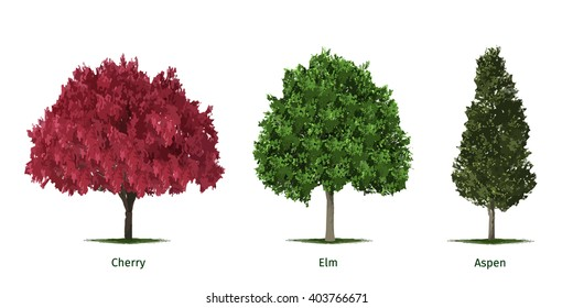Vector illustrations of various tree