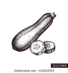 Vector illustrations of Zucchini.  Hand drawn vegetable in engraved style. Healthy food drawing. Fresh and organic farm product for menu design.