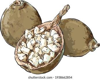 Vector image of a baobab fruit, baobab seeds powder