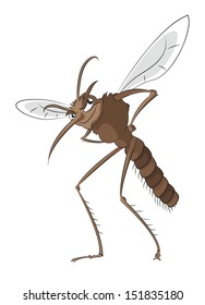 Vector image of big evil bad mosquito