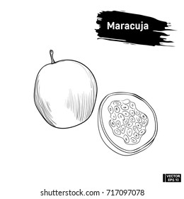 Vector image. Black and white sketch of exotic fruit maracuja. Passion fruit outline, imitation of ink.