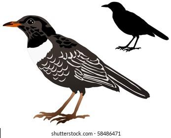 vector image of the blackbird
