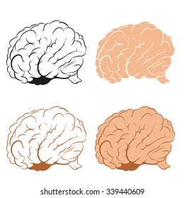Vector image of brains in different   style