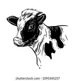 Vector image of a calf's head