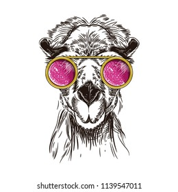 Vector image of a camel in pink glasses. T shirt design
