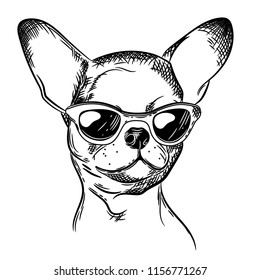 Vector image of chihuahua in black glasses. Prints for T-shirts. Tattoo Designs