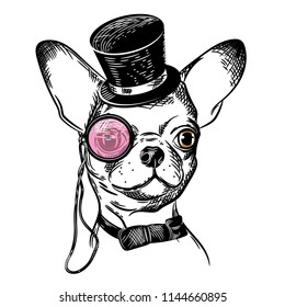 Vector image of a chihuahua dog with a cylinder and a pink monocle. T shirt design