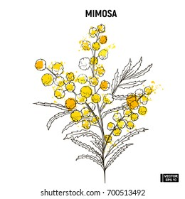 Vector image. Color hand draw sketch flowers. Yellow mimosa doodle.