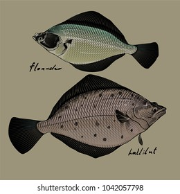 Vector image of commercial fish, flounder, halibut, style of engraving