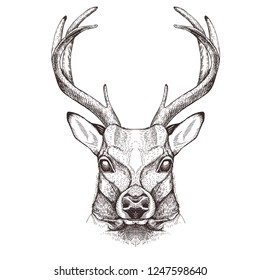 Vector image of a deer head. Tattoo sketch.