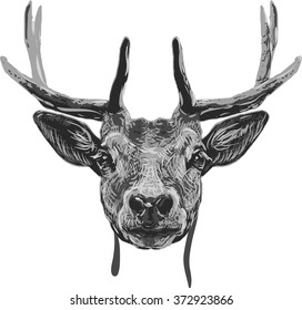 Vector image of a deer's head on a white background