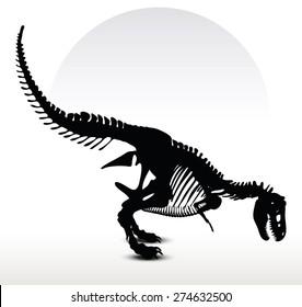 Vector Image - dinosaurs t-rex skeleton isolated on white background