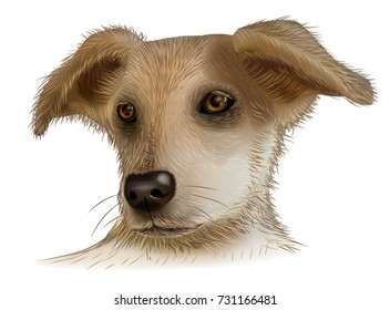 Vector image of an dog on white background. Dog - symbol of the year 2018. Dog - symbol of the Chinese New Year.