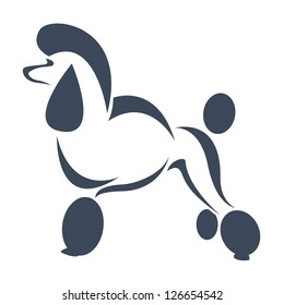 Vector image of an dog (poodle) on white background