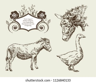 Vector image of donkeys and goose A set of agricultural illustrations in the style  of engraving.