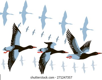vector image of a flying flock of wild geese