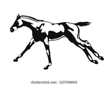 A vector image of a freely cantering foal.