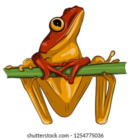Vector image of an frog design on white background,