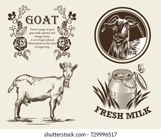 Vector image of goat, goat milk canister and vintage frame. A set of agricultural illustrations in the style of engraving.