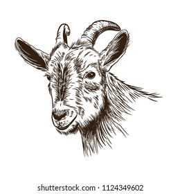 Vector image of a goat's head in the style of engraving.