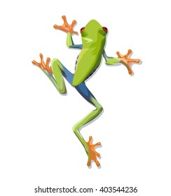 Vector image of a green tree-frog on white background. Vector 10 EPS.
