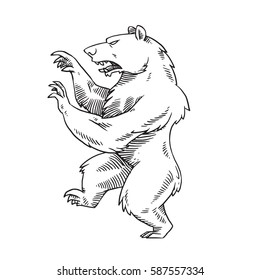Vector image of a heraldic bear standing on his hind legs and turn left on a white background. Coat of arms, heraldry, emblem, symbol. Made in monochrome style. Vector illustration.