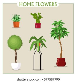 Vector image, illustration. Indoor plants in pots. Collection flowers in flat style