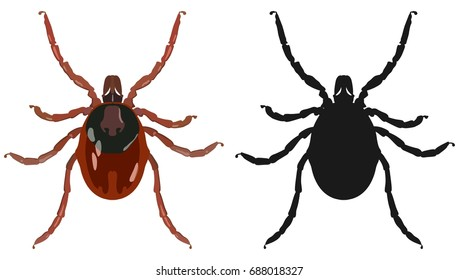 Vector image of an insect tick and its black silhouette on a white background.