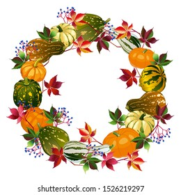 Vector image. Isolates on a white background squash and leaves of wild grapes. Autumn wreath of different types of pumpkins and autumn leaves.
