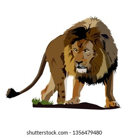 vector image of king of african savanna lion.