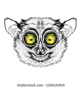 Vector image of lemur lory. Tattoo art. T-shirt design.