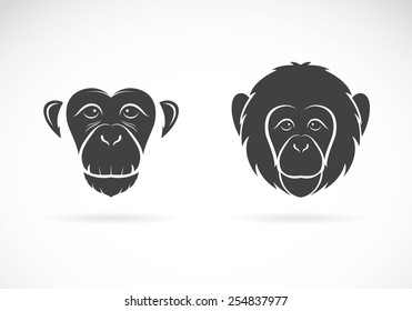 Vector image of monkey face on white background